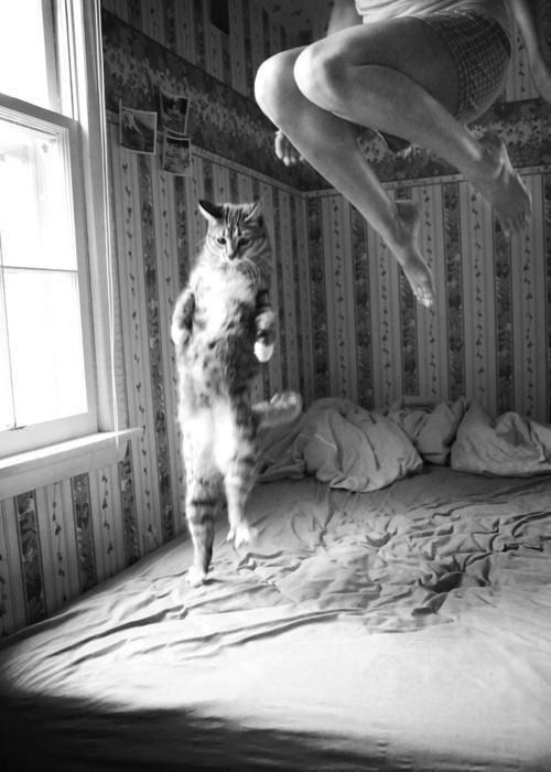 Jumping for joy. Now I just need a ginger kitty to jump along with me