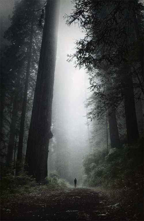 Lost in the Oldest of Forests (by J A M U S)